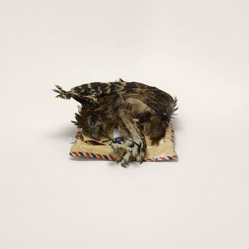 20111221 Taryn Simon - Contrband - Bird Corpse