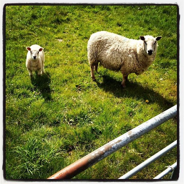 20120428 Springtime grazing