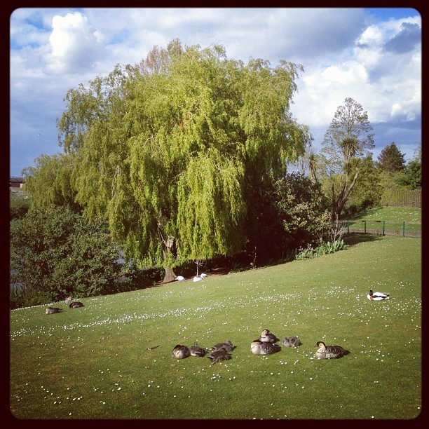 20120512 Resting ducks