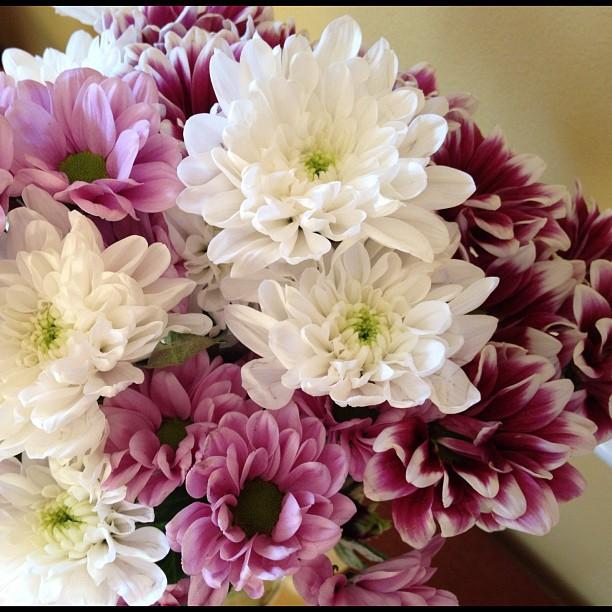 20120808 Lovely flowers