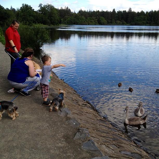 20120820 Feeding the ducks
