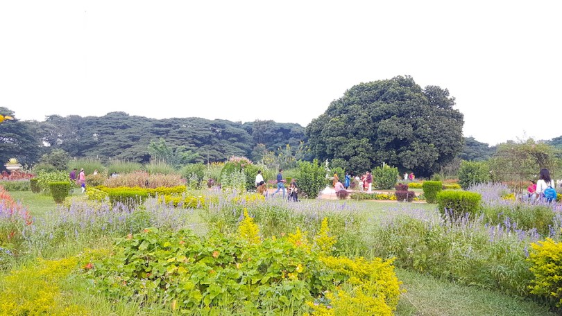 The garden outside Bangalore Palace was in full bloom