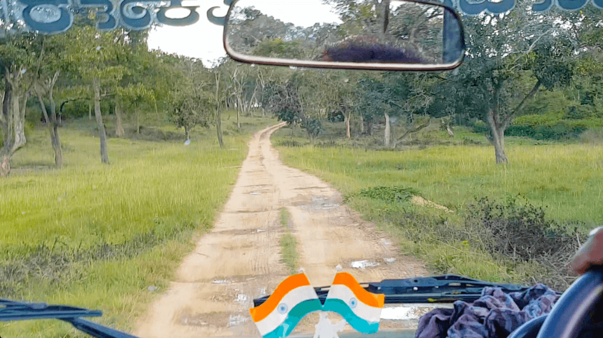 The track for vehicles inside Bandipur Tiger Reserve surrounded by trees and greenery