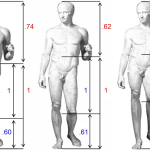 Michaelangeo's David is shown with stretched torso, regular proportions, and shrunk torso. The ideal proportions are 1.618