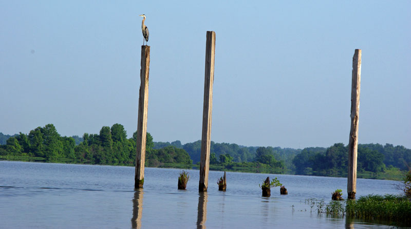The remains of a former gravel mining operation in Columbus Lake provide habitat and spawning areas for fish.