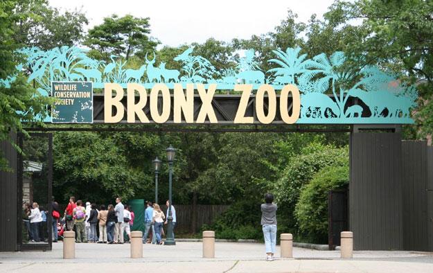 bronx-zoo-address