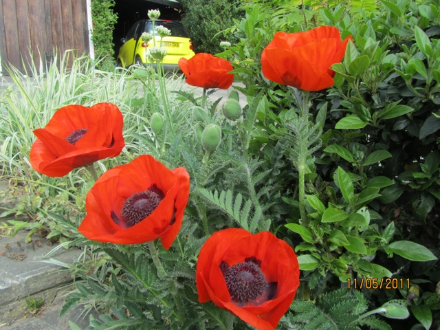 On the wearing of poppies