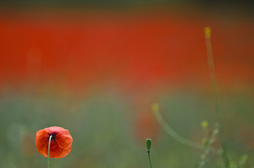 Some further thoughts on Remembrance Sunday