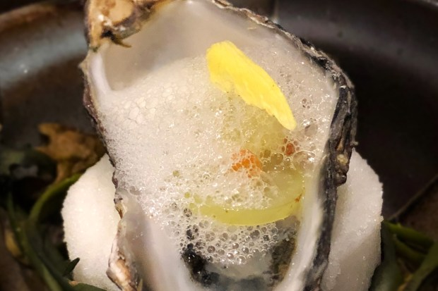 Washington Oysters