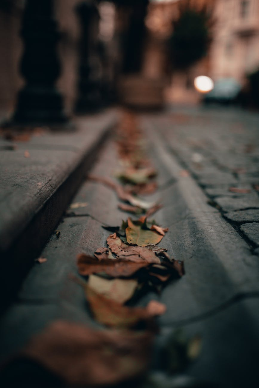 fallen autumn leaves on pavement in city