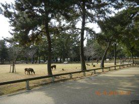 Deers all around