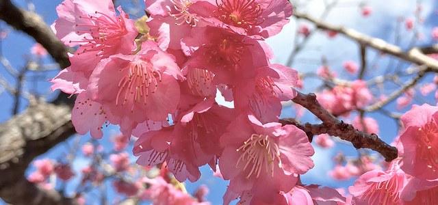 Spring in Okinawa