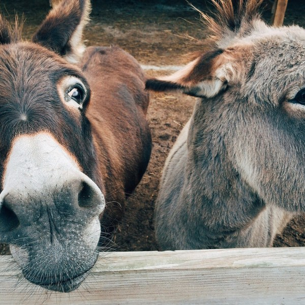 Negotiation Donkeys – Quit Your Crying!