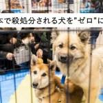 殺処分を待つ犬を〝ふるさと納税〟で救えるのをご存知ですか?