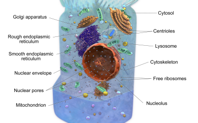Organelles: Year Seven Term Two Week One Lesson One