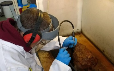 #Rooswijk1740 Conservation – A Volunteer Perspective for British Science Week 2019