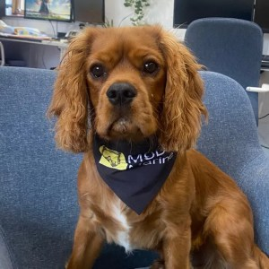 Jack, the MSDS Marine office dog