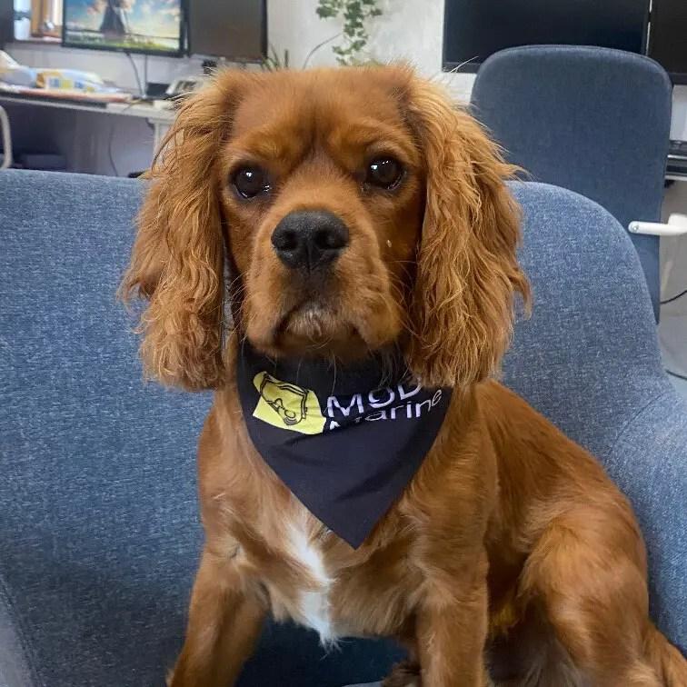 Jack, de MSDS Marine kantoor hond