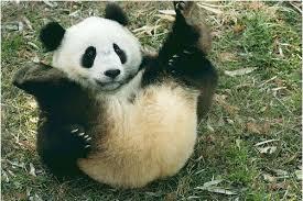 ☆☆パンダも唸る気持ちよさ♪♪☆☆