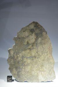 Nwa 12773 (96)
