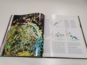 Journey through space time meteorite book (11)