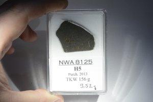 Nwa 8125 (5)