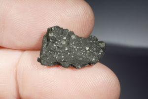 Tarda carbonaceous (26)