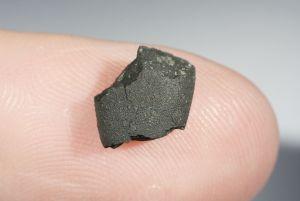 Tarda carbonaceous (30)
