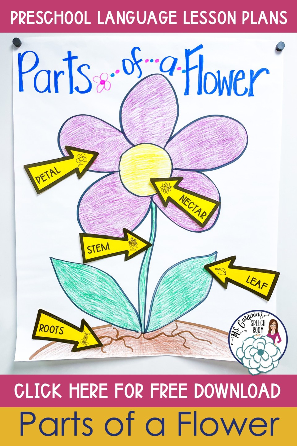 spring-anchor-chart parts-of-a-flower