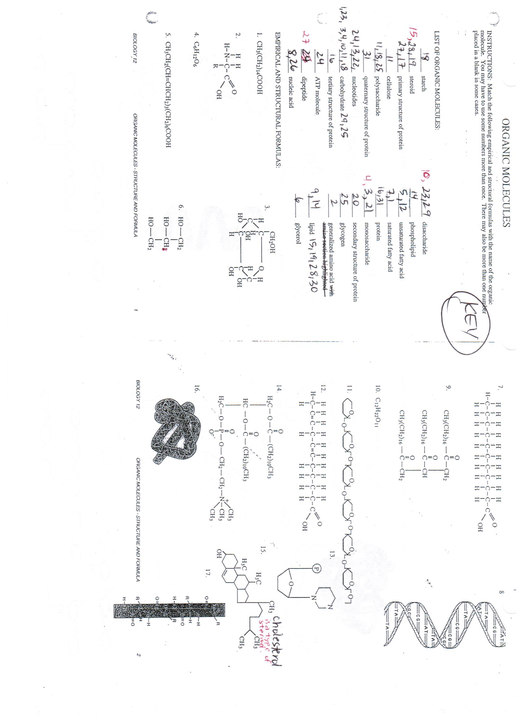 30 Biological Molecules Worksheet Answers