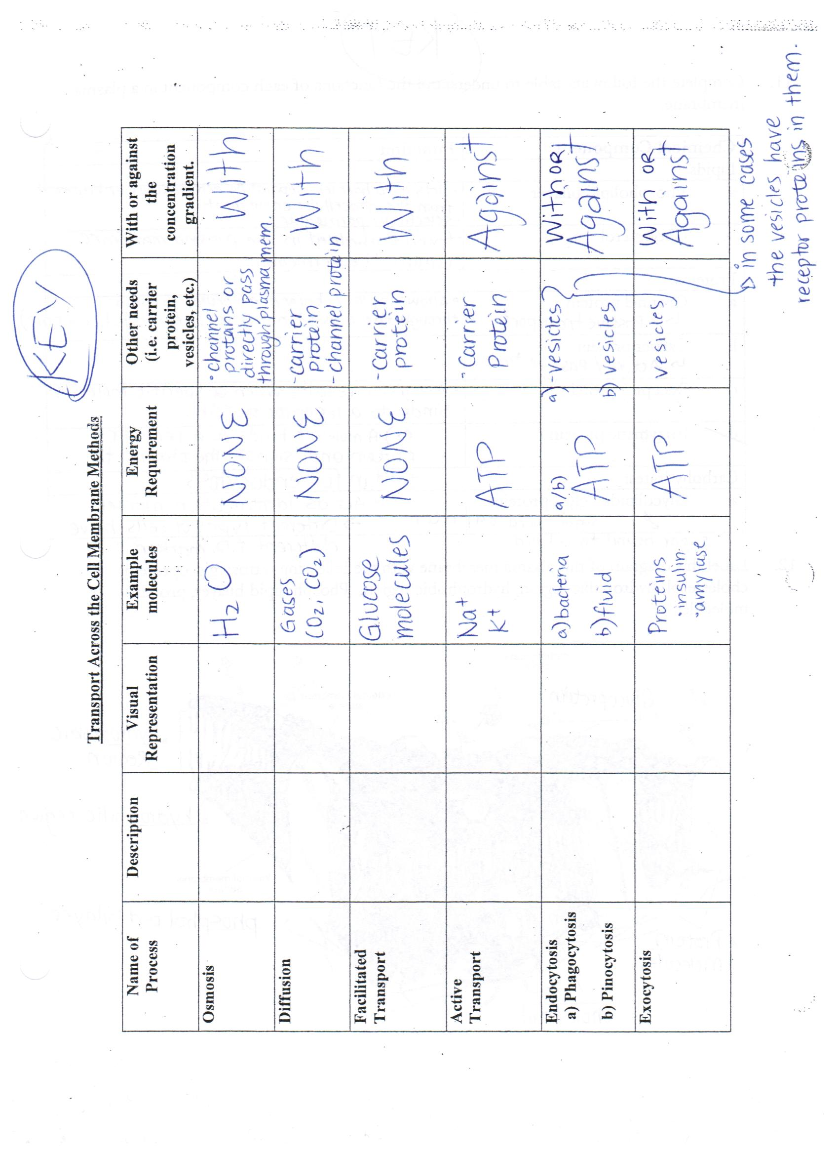 Worksheet Cell City Worksheet Answers Worksheet Fun