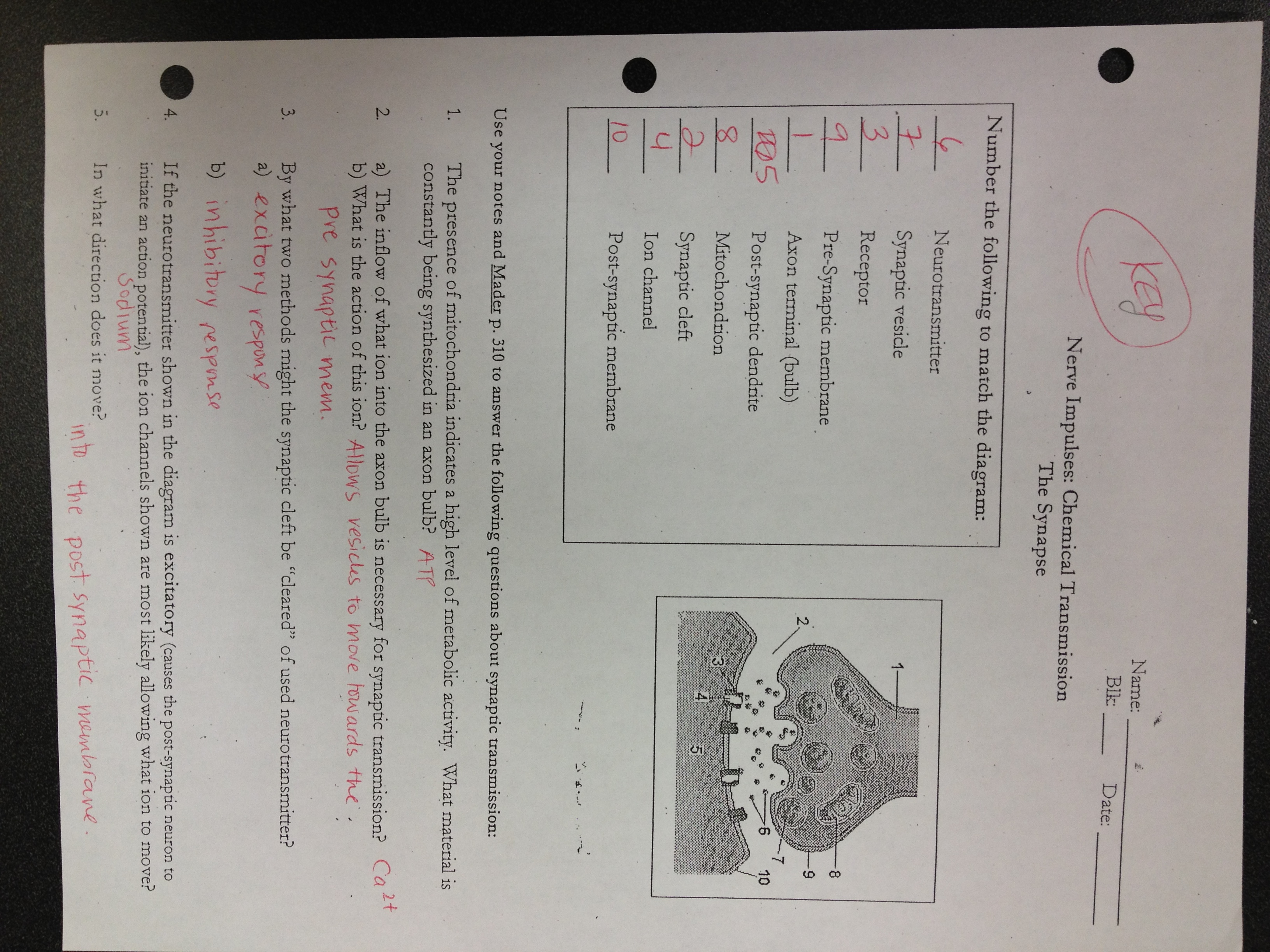 Answer Keys Nervous System Worksheets