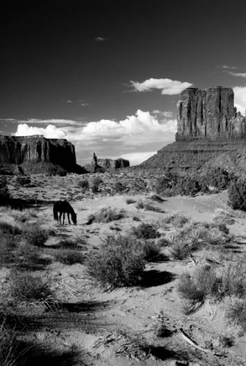 B & W Horse Monument Valley