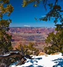 GRAND CANYON TREE & SNOW
