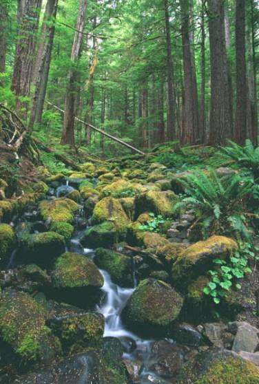 Rainforest vertical