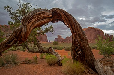 Monument Valley Tree Window