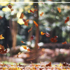 5 Tips to Stay Healthy This Fall (1)