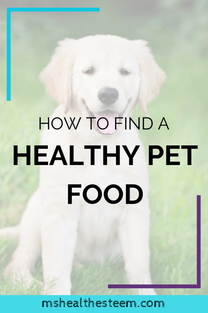 How To Find a Healthy Pet Food - What your dog and cats need to eat in order to be healthy. Ingredients to avoid, and how to find a healthy pet food.