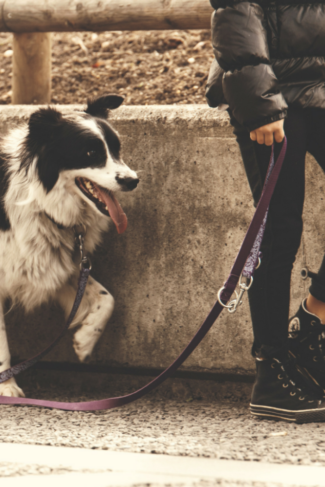 The Awesome Health Benefits of Having a Pet| How Dogs, Cats, Fish and more support your muscle and bone health, relieve stress, support the cardiovascular system by decreasing blood pressure and lowering the risk of heart attacks and even add years to your life. Booyah! Click through for the post.