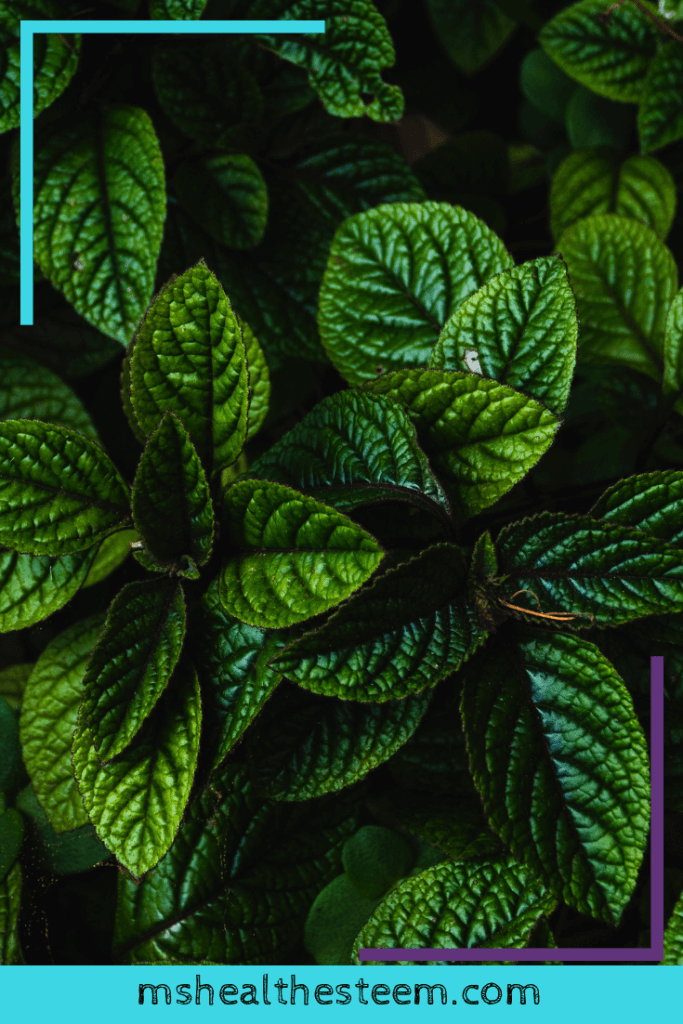 A close up of mint leaves - mint can help soothe a sensitive stomach