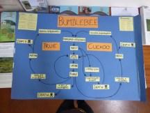 My bumblebee lifecycle