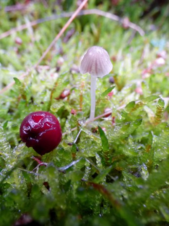 Small treasures at ground level