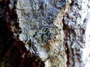 Presumably lichen