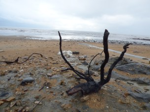 Driftwood?