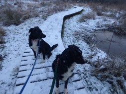 Pups at Werndryd Reserve (on leads of course)