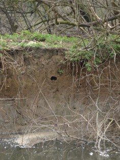 A hole in the bank - a nesting site perhaps?