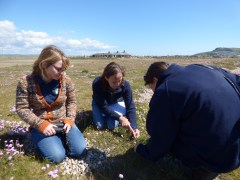 Discussing wildflowers on Chesil Beach