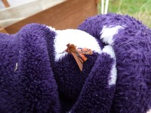 Ruby Tiger moth (Phragmatobia fuliginosa) in very bad shape!
