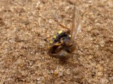 Not sure what's wrong with this wasp