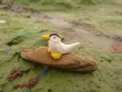 Little Tern by Vicky